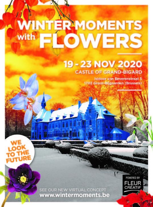 Winter Moments with Flowers in Groot-Bijgaarden